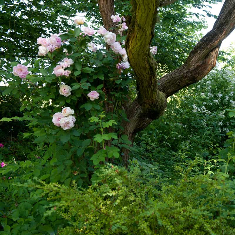 Altes Rosenwäldchen
