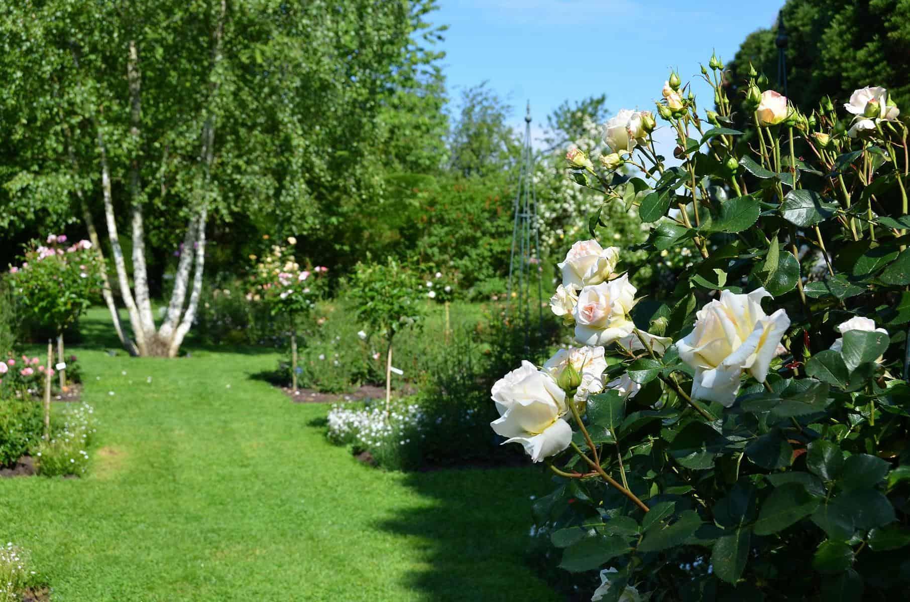 Rosenversuchsgarten