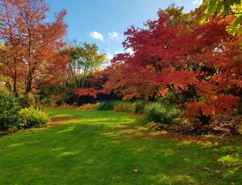 Zauberhafter Herbst
