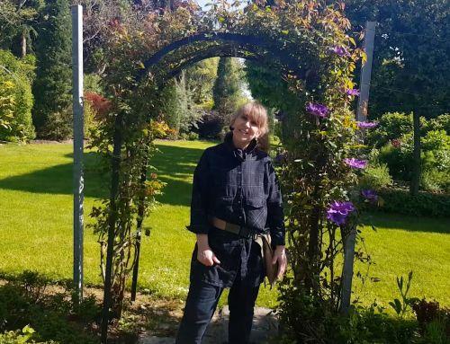 Video: Rosen Feinschliff vor der Blüte