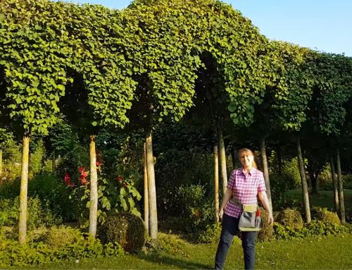 Video: Besonders gute Rosen für Hecken im Garten