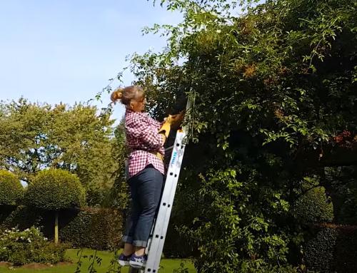 Video: Herbstvorbereitungen – Kletterrosen & Rambler